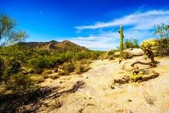 Abandone el paisaje con los cantos rodados con el Saguaro y los cactus de Cholla con la montaña negra en el fondo Fotografía de archivo