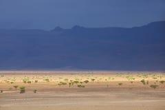 Abandone el paisaje con los ?rboles oscuros del cielo y del acacia. Foto de archivo libre de regalías