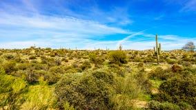 Abandone el paisaje con sus numerosos cactus y arbustos del Saguaro a lo largo de Bartlett Dam Road Fotografía de archivo libre de regalías
