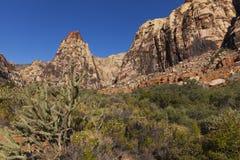 Abandone el paisaje con un cactus y un cielo azul profundo. Imagenes de archivo