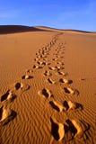 Abandone el paisaje del desierto de Gobi con la huella en la arena, Mongolia Fotos de archivo libres de regalías
