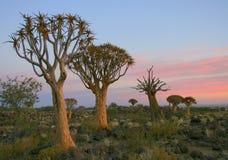 Abandone el paisaje en la puesta del sol con un árbol de la aljaba Imágenes de archivo libres de regalías