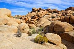 Abandone el paisaje, Joshua Tree National Park, California, los E.E.U.U. Imagen de archivo