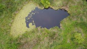Abandone el pantano con la mala hierba y la porción de árbol en campo foto de archivo libre de regalías