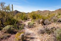 Abandone el rastro en el Saguaro NP cerca de Tucson Arizona los E.E.U.U. Fotos de archivo libres de regalías