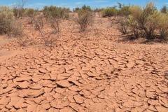 Abandone el suelo seco rojo, plantas en suelo de desierto Foto de archivo