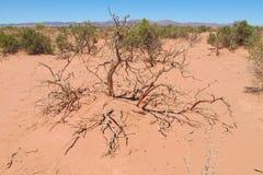 Abandone el suelo y los arbustos arenosos rojos en él Imagenes de archivo