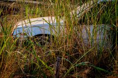 Abandone gamla bilar in i haverier djupt i skogar Arkivbild