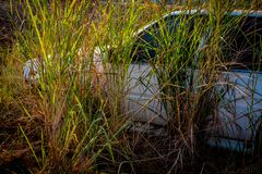 Abandone gamla bilar in i haverier djupt i skogar Royaltyfri Fotografi