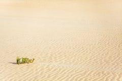 Abandone la arena Imagen de archivo libre de regalías