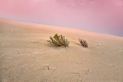Abandone la arena Fotos de archivo