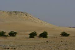 Abandone la arena con los árboles y las dunas de arena, en el corazón de la Arabia Saudita en la manera a Riad Foto de archivo