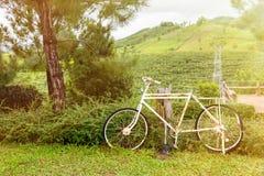 Abandone la bicicleta en el jardín en el tiempo de mañana con luz del sol Imagen de archivo