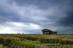 Abandone la casa de madera rodeada por el campo de arroz con el fondo dramático de la lluvia de las nubes Imagen de archivo libre de regalías