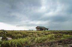 Abandone la casa de madera rodeada por el campo de arroz con el fondo dramático de la lluvia de las nubes Fotografía de archivo libre de regalías