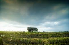 Abandone la casa de madera rodeada por el campo de arroz con el fondo dramático de la lluvia de las nubes Foto de archivo libre de regalías