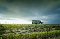 Abandone la casa de madera rodeada por el campo de arroz con el fondo dramático de la lluvia de las nubes Fotos de archivo libres de regalías