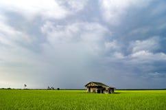Abandone la casa de madera rodeada por el campo de arroz verde sobre dramat Fotos de archivo libres de regalías