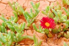 Abandone la flor Fotografía de archivo libre de regalías