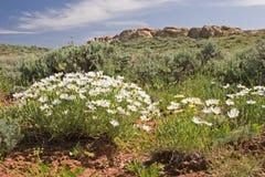Abandone la flora y la arcilla roja Imagen de archivo