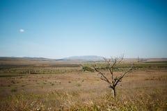 Abandone la naturaleza salvaje con el árbol y las montañas en la distancia Imagen de archivo libre de regalías