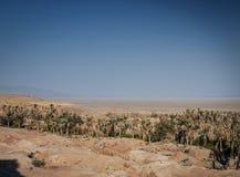Abandone la opini?n del paisaje en el oasis Ir?n meridional del garmeh fotos de archivo libres de regalías