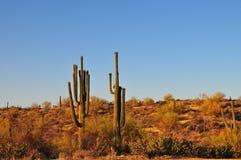 Abandone la puesta del sol del paisaje con gigantea del Carnegiea del cactus del Saguaro fotos de archivo