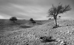 Abandone la tierra con árboles y un animal muerto de la cabra Fotografía de archivo