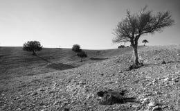 Abandone la tierra con árboles y un animal muerto de la cabra Foto de archivo