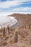 Abandone la vegetación en la isla de Incahuasi (Bolivia)) Fotografía de archivo