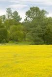 Abandone las flores amarillas del oro en campo brillantemente coloreado de la primavera de la carretera 58 al este de Santa Marga Foto de archivo