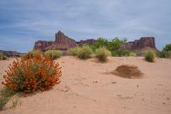 Abandone las flores y las colinas de la hormiga cerca de Rim Road Moab Utah blanco Imágenes de archivo libres de regalías