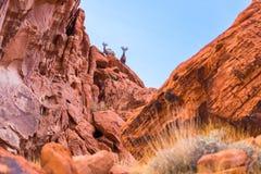 Abandone las ovejas grandes del cuerno en el valle del parque de estado del fuego, Nevada Foto de archivo