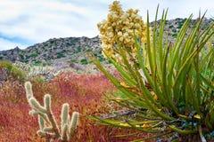 Abandone los wildflowers y el cactus en la floración en el desierto de Anza Borrego C Imágenes de archivo libres de regalías