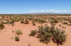 Abandone o solo e arbustos arenosos vermelhos nele Fotografia de Stock