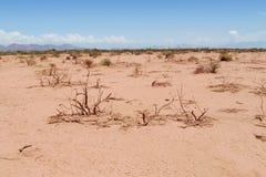 Abandone o solo e arbustos arenosos vermelhos nele Imagem de Stock