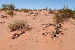 Abandone o solo e arbustos arenosos vermelhos nele Fotos de Stock