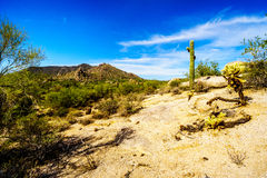 Abandone a paisagem com os pedregulhos com Saguaro e cactos de Cholla com a montanha preta no fundo Fotografia de Stock