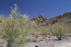 Paisagem da montanha do deserto com céu Cloudless foto de stock