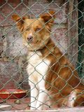 Abandoned. Dog at kennels Stock Photos