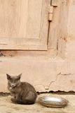 Abandoned animal eyes kitten Stock Image