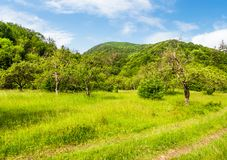 Abandoned apple orchard on a grassy field. Lovely mountainous landscape in summertime Stock Image