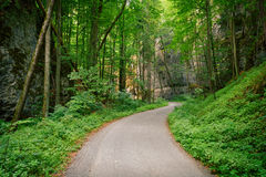 Abandoned asphalt road in a deep green forest Stock Photography