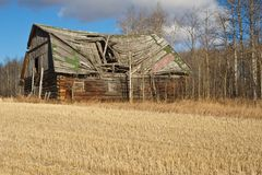 Abandoned barn in harvestedwheat  field Royalty Free Stock Photography