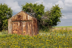 An abandoned barn. Standing in flowers and weeds on the prairie royalty free stock images