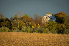Abandoned Barn In The Trees Stock Images