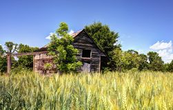 Abandoned Barn and Wheat Field. Old abandoned barn and wheat in a rural North Georgia landscape Royalty Free Stock Images