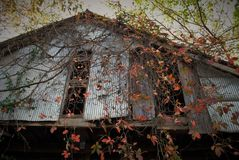 Abandoned barn. In the woods Stock Images