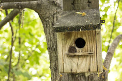 Abandoned bird house in the woods Royalty Free Stock Photo