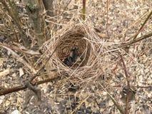 Abandoned bird 's nest  Stock Photo